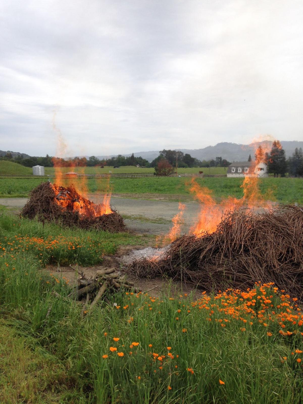 Low-smoke vineyard burning