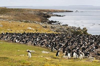 This 20-mile-long Island Filled With Thousands Of Penguins Is For Sale