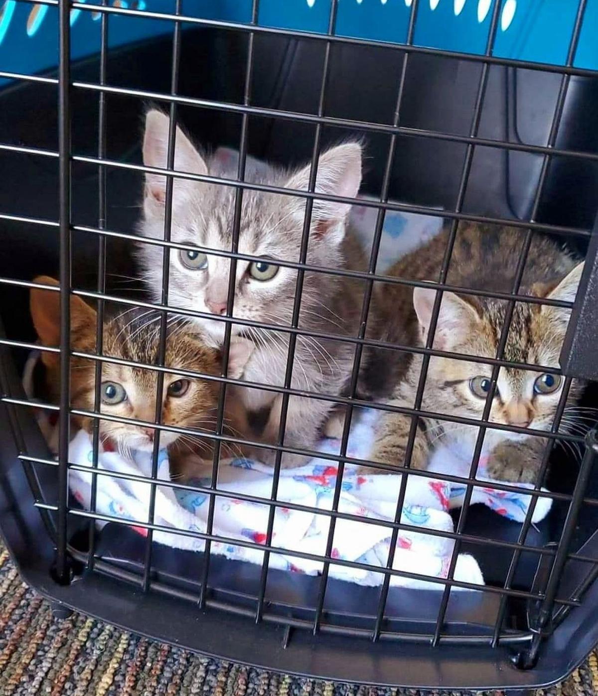 Adopt a Pet   Kittens