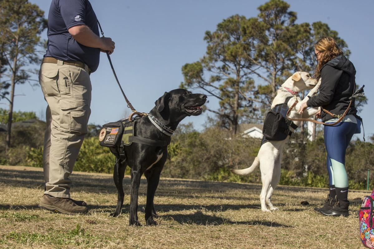 Therapy Dog Training Gainesville Florida