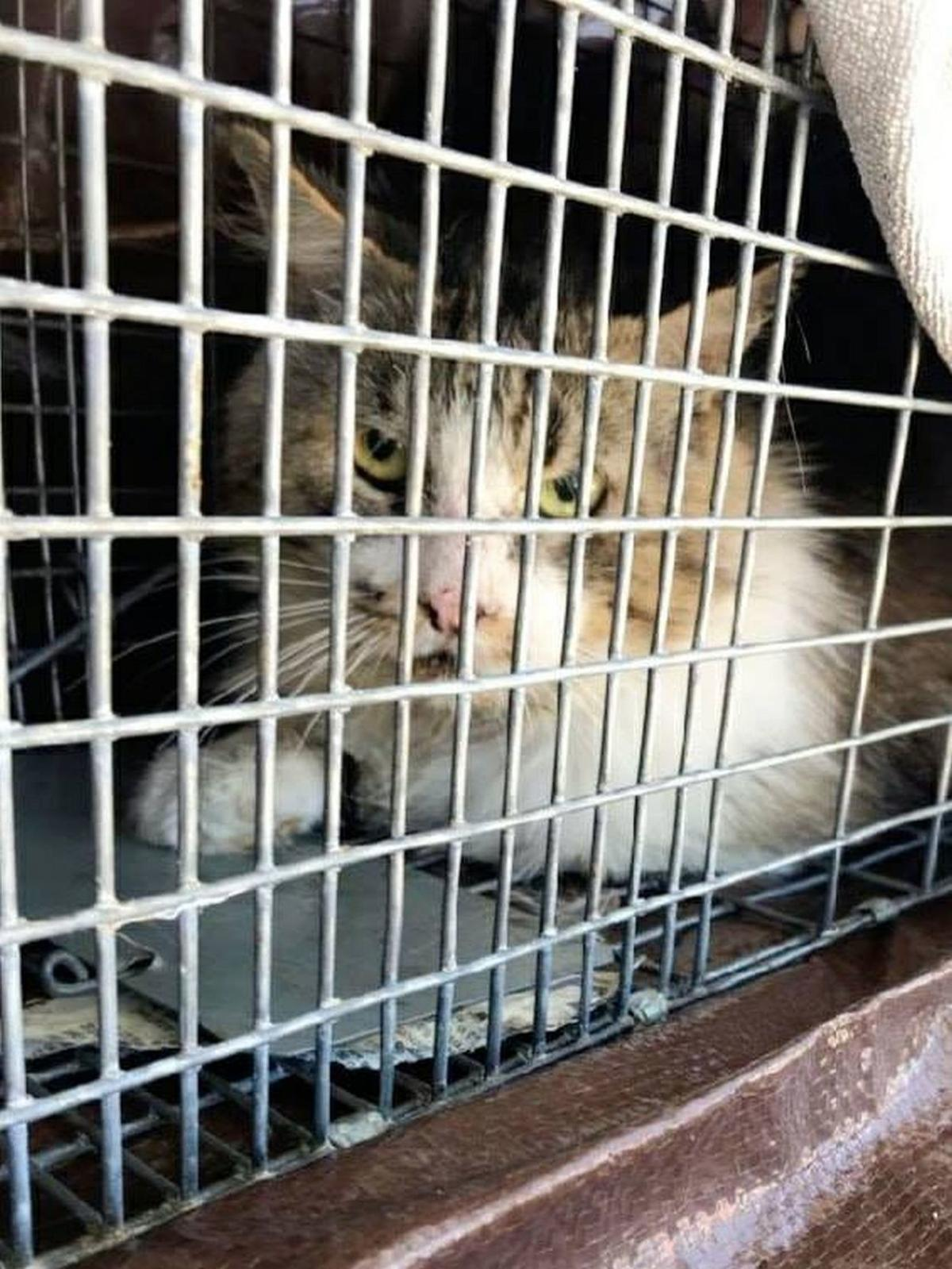 Adopt a Pet | Donate to Spay/Neuter