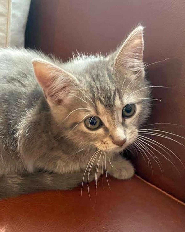 Adopt a Pet   Mojito