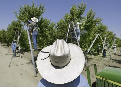 California Pesticide Rule Tightening