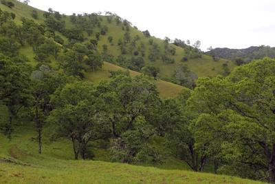 Webber Ranch
