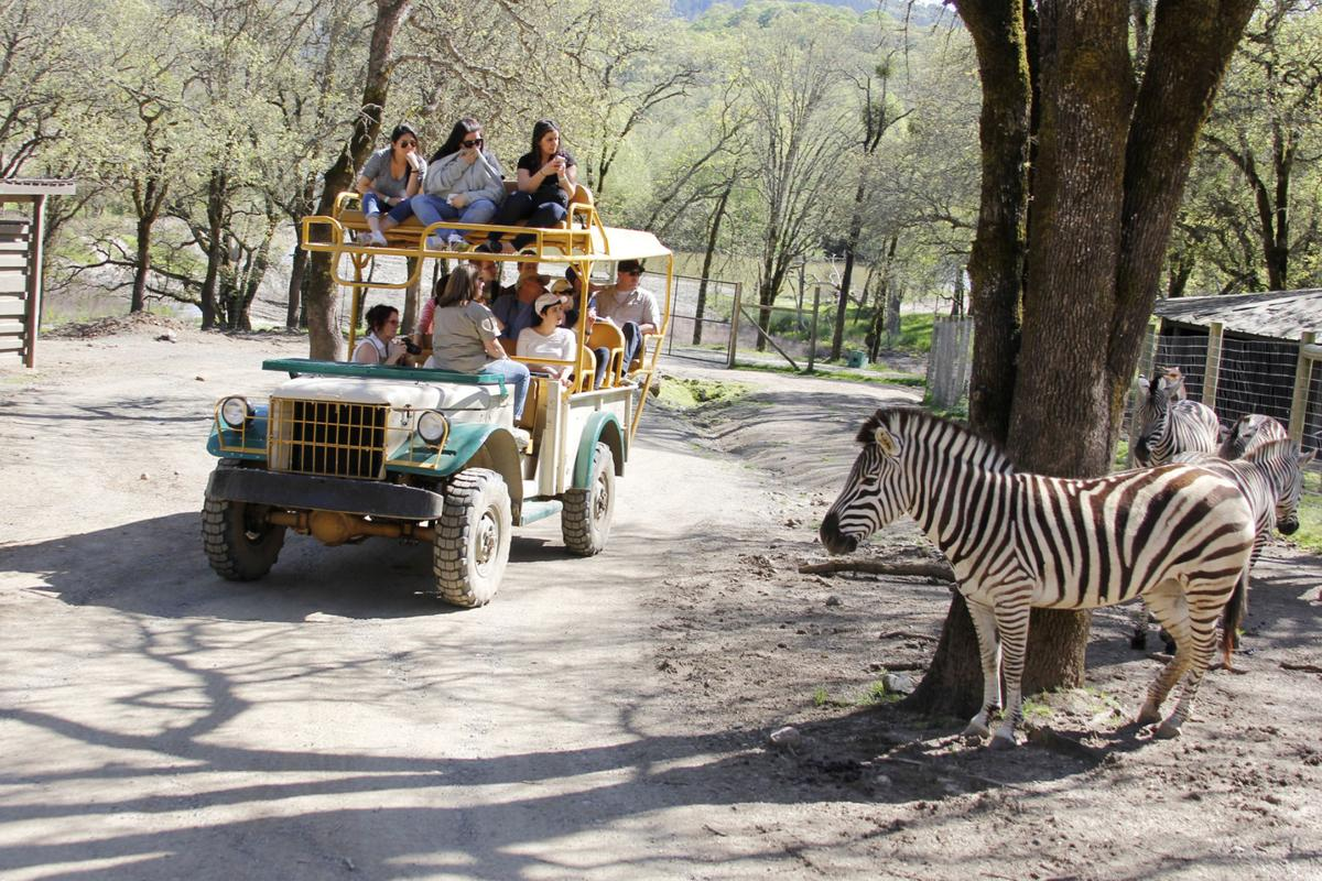 'Alternative Facts Day' at Safari West