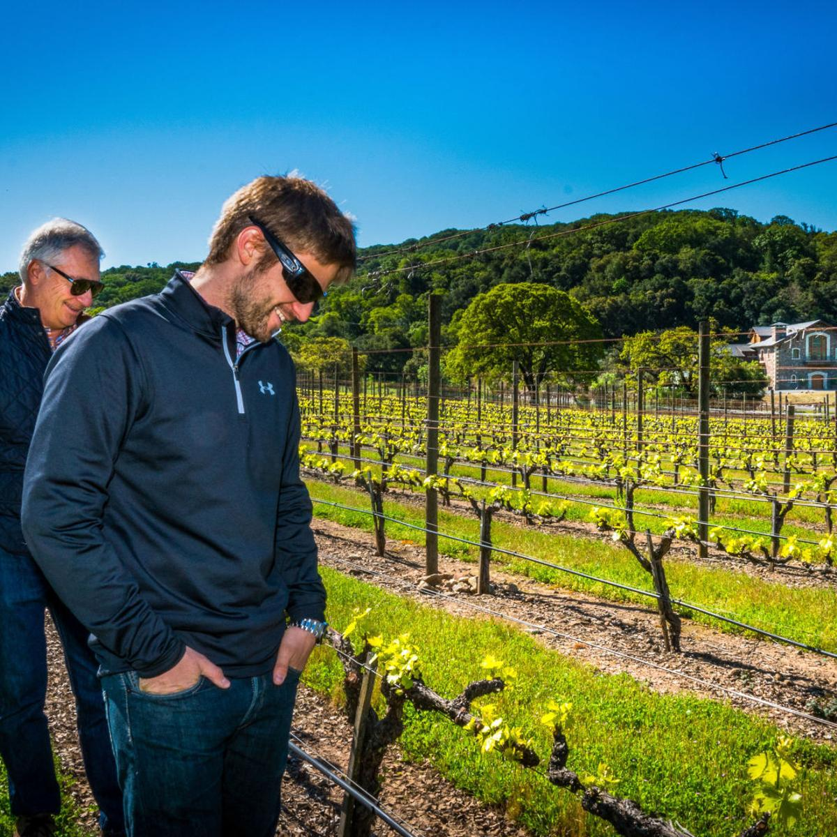 Napa Valley harvest report: Growers welcome rainfall | News