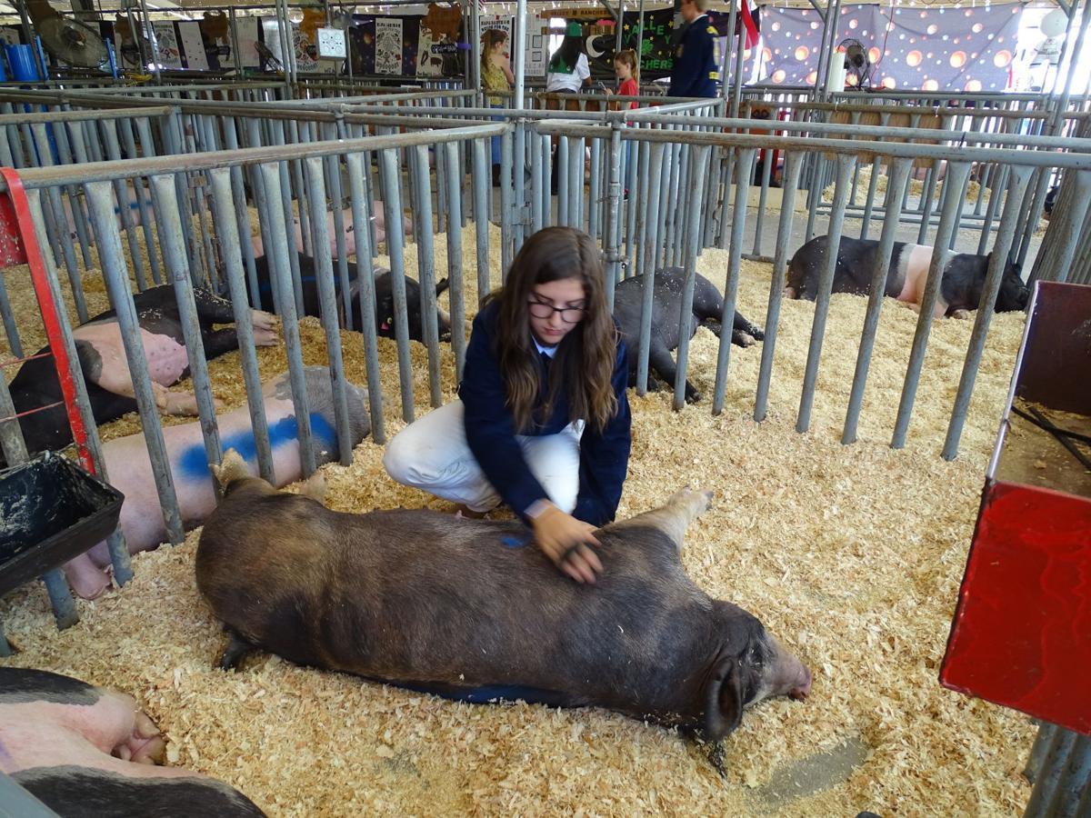 Junior Livestock Auction 2019