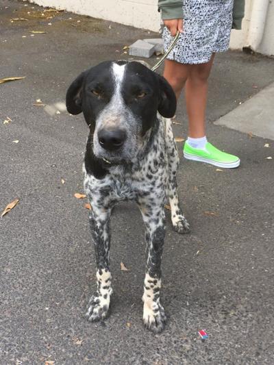 Dog found in St. Helena