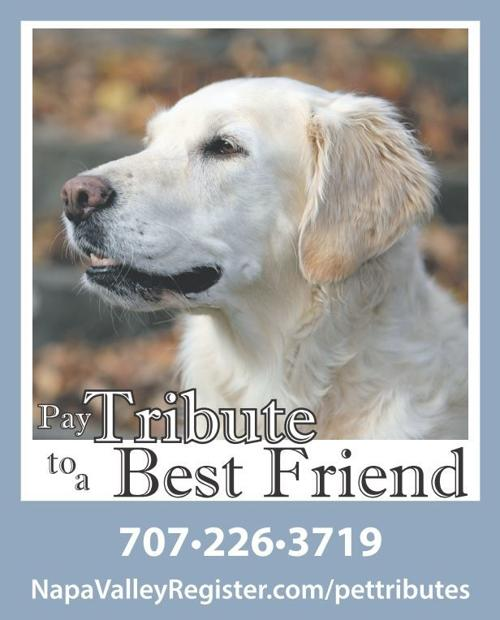Pet Tribute
