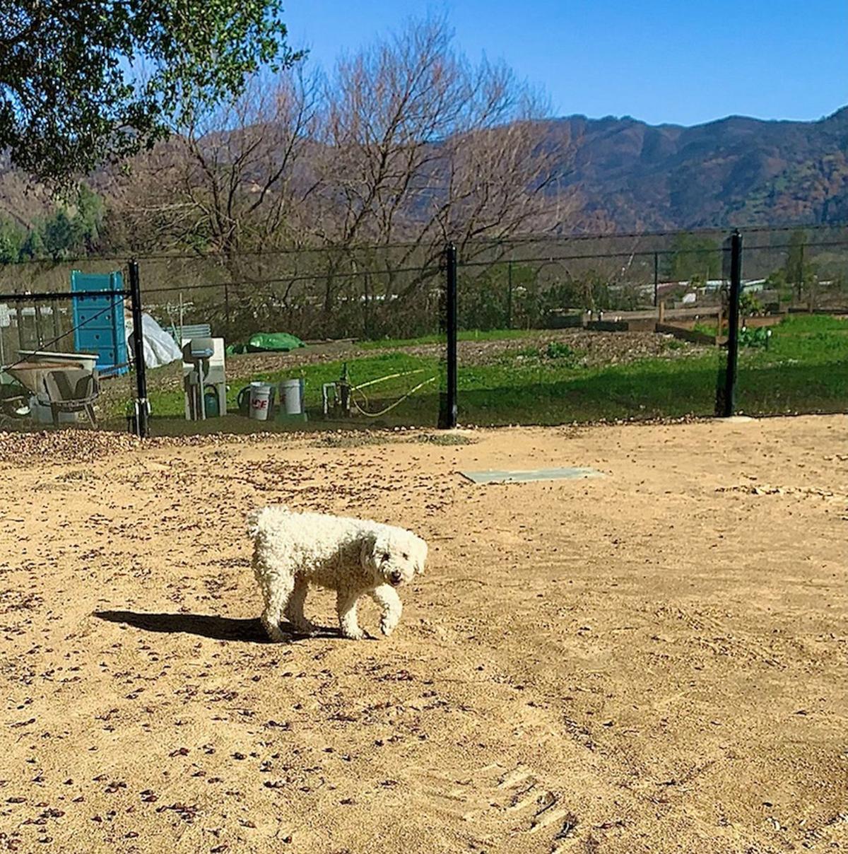 Calistoga Dog Park