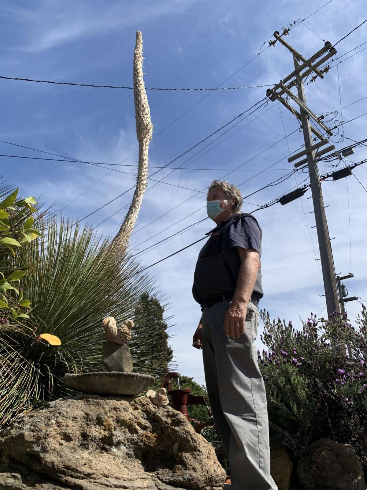 Exotic flower emerges on Tallac Street