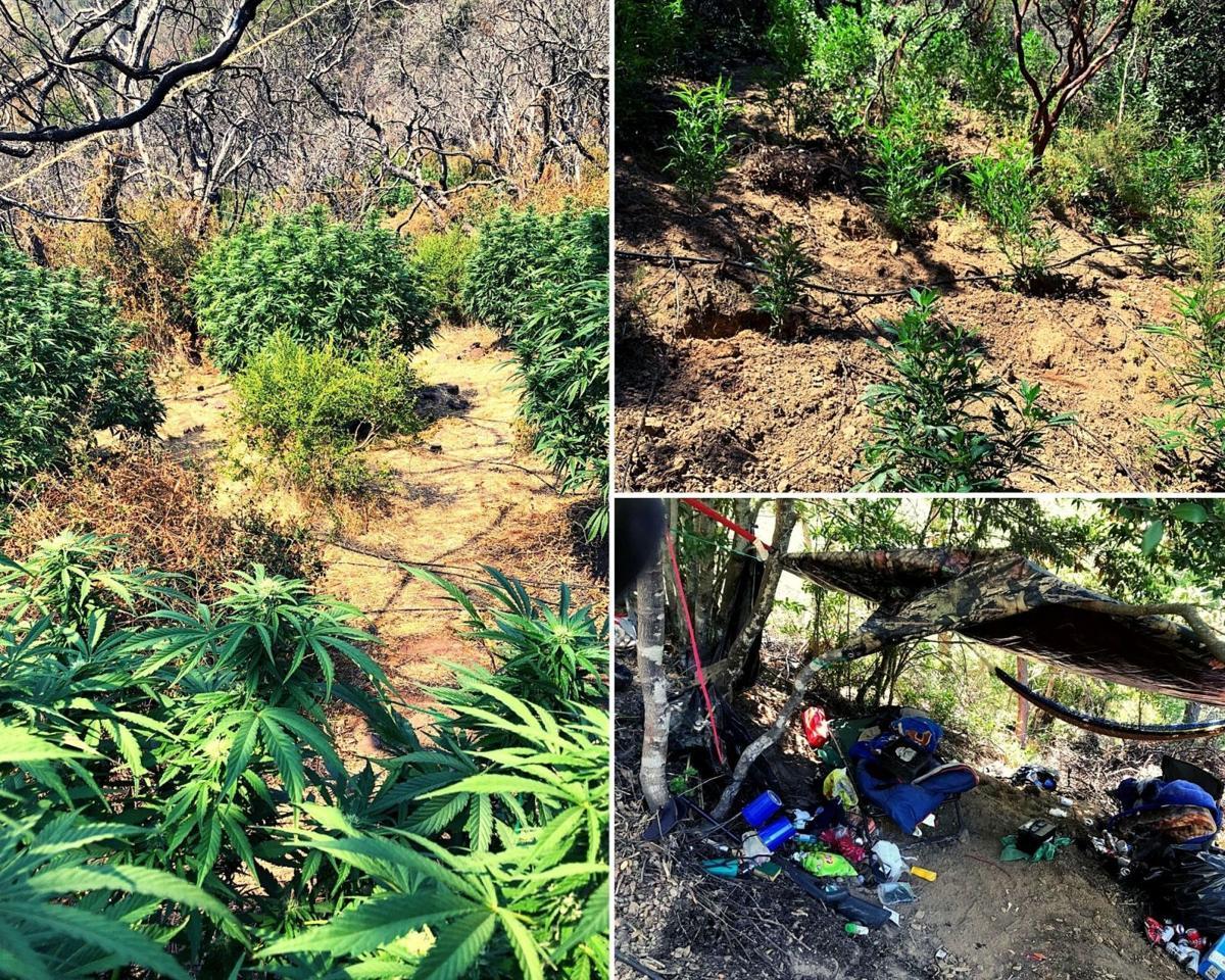Marijuana grows California State Praks