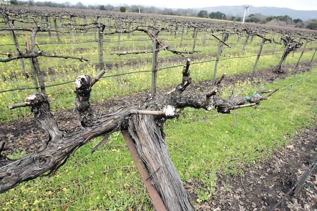Dormant Vineyard