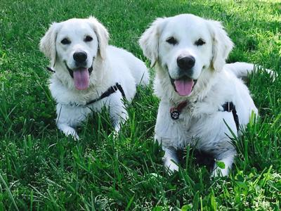 Pic of the Litter: Boggy and Charlee
