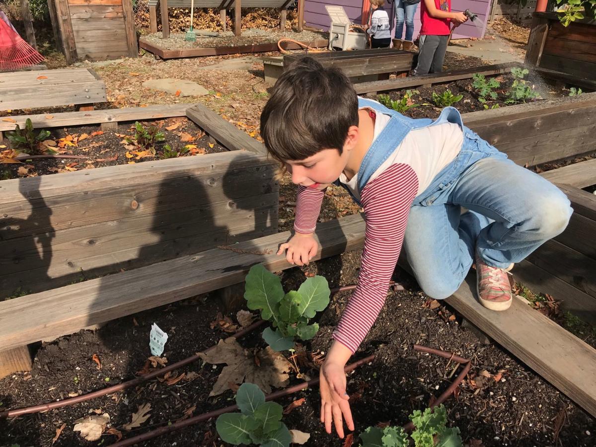 Olivia Oler in the Yountville school garden