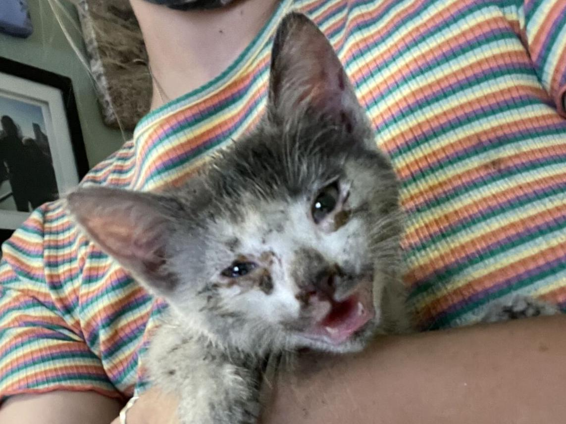 Stowaway kitty survives wild ride to Napa