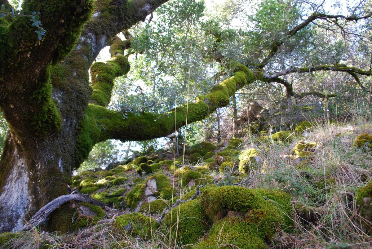 Oak removal permit program in Watershed Initiative