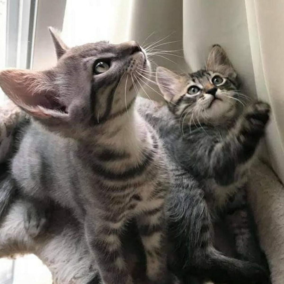 Adopt a Pet | Aslan & Tumnus