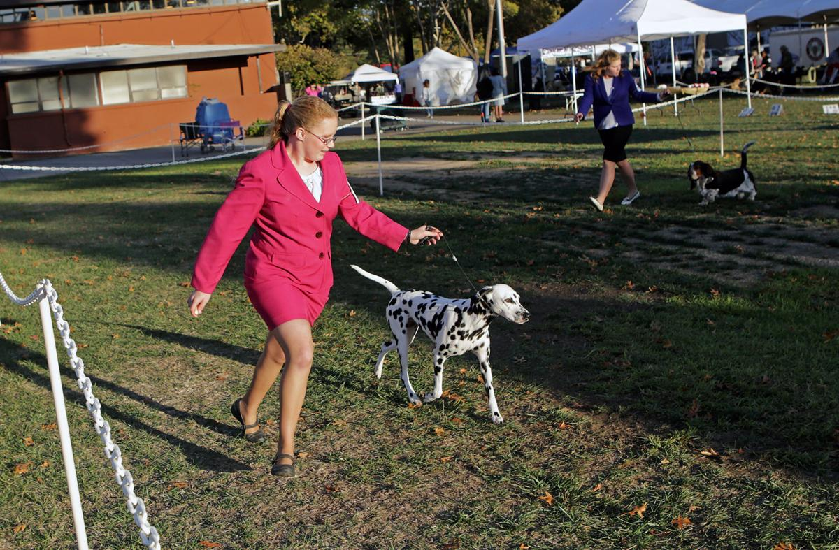 Wine Country Kennel Club Dog Show