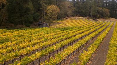 Baldacci Vineyards