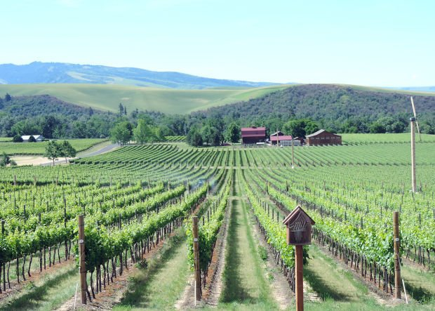 not all wine country is in california walla walla has become a