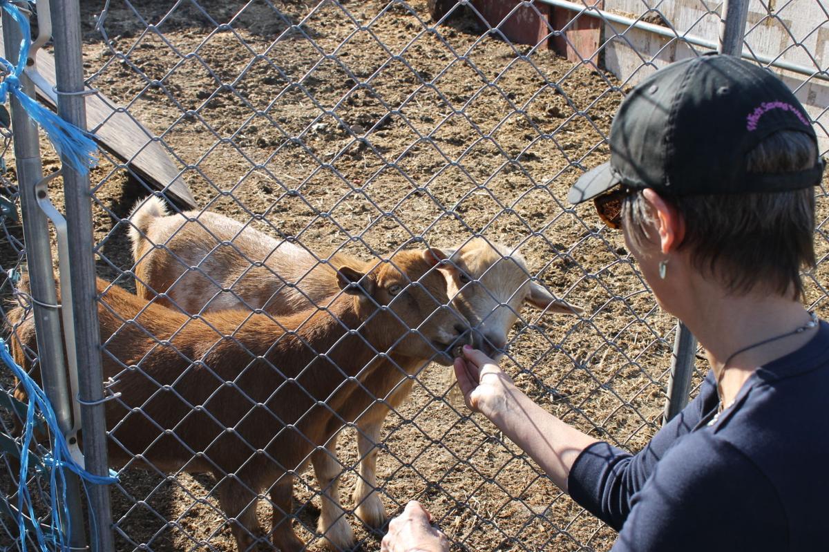 Goats and Jan Flynn