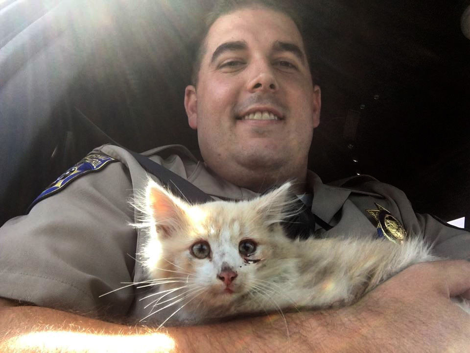 CHP officers rescue kitten