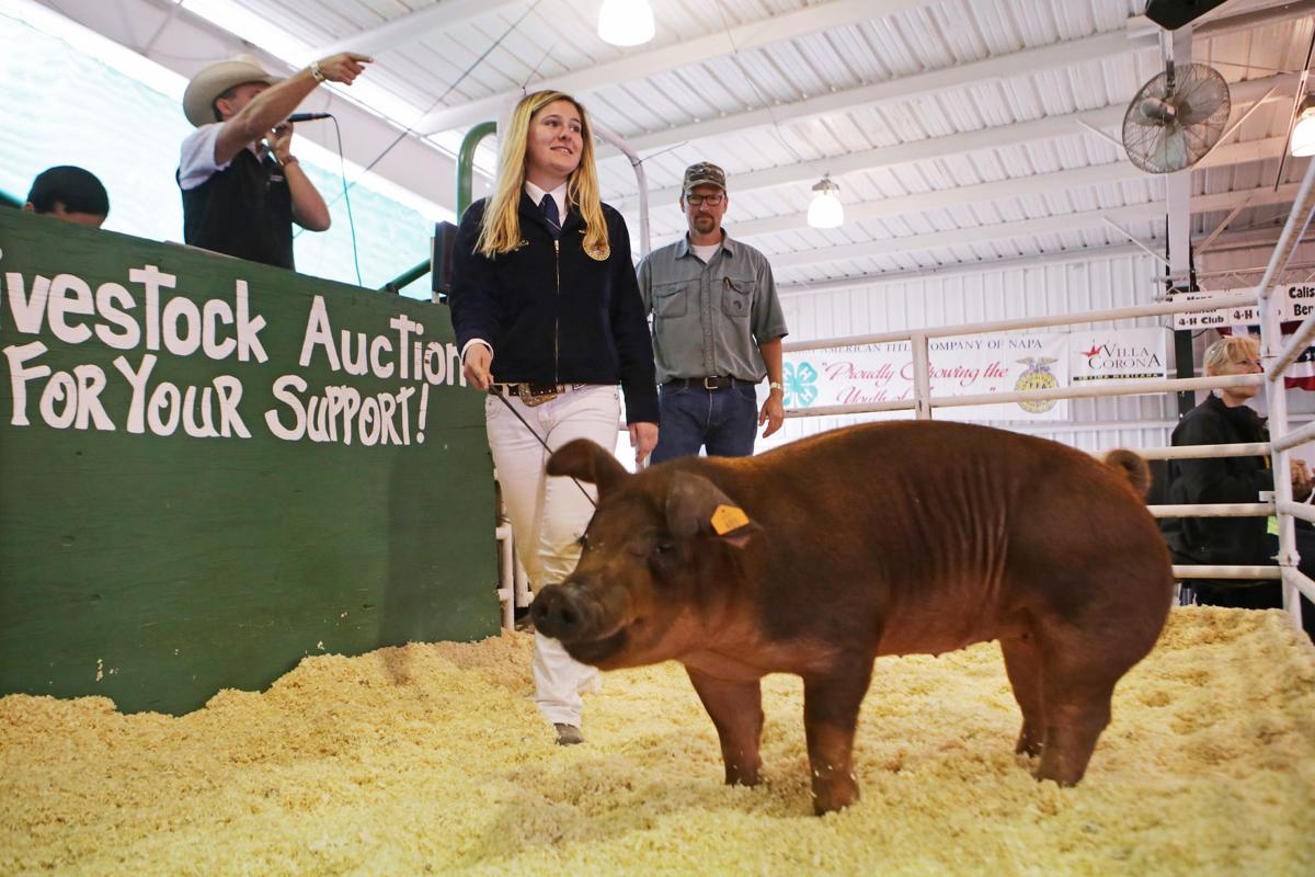Junior Livestock Auction 2017