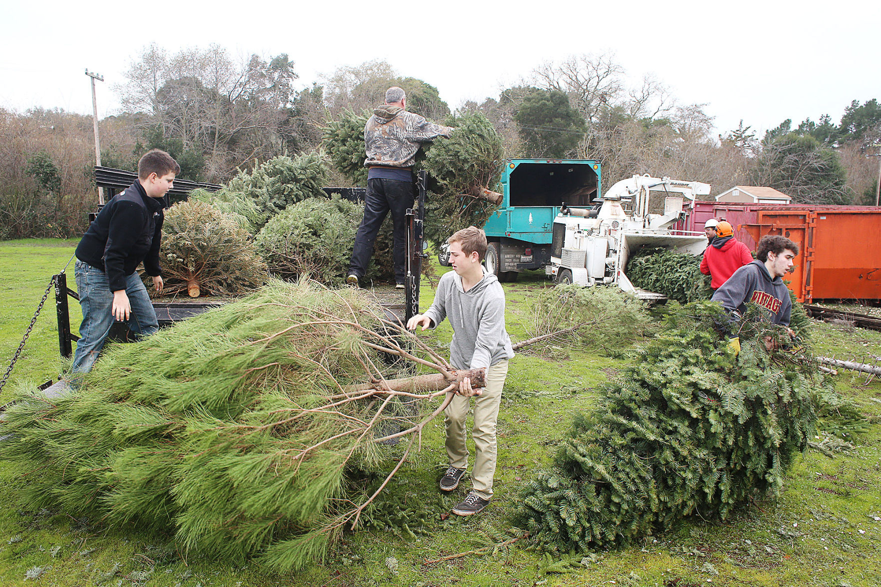 Scouts learn hard work, earn reward during Christmas tree pick-up ...