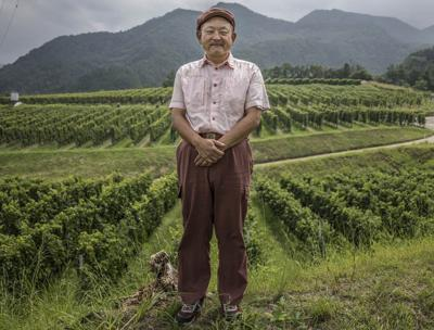 japan-wine