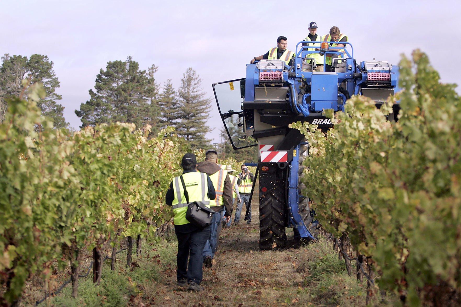 Napa Valley College's mechanical grape harvest (copy)
