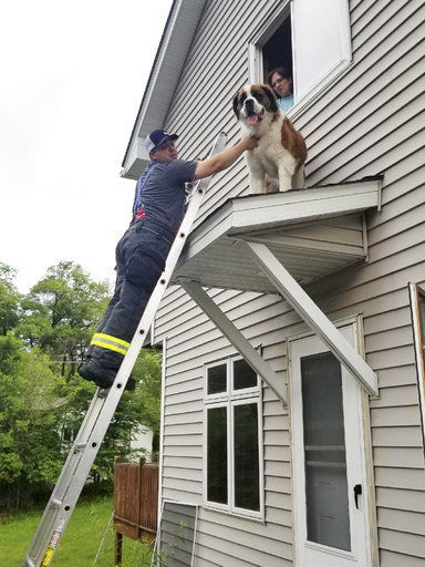 'Roof, roof!' Dog rescued from overhang roof at his home