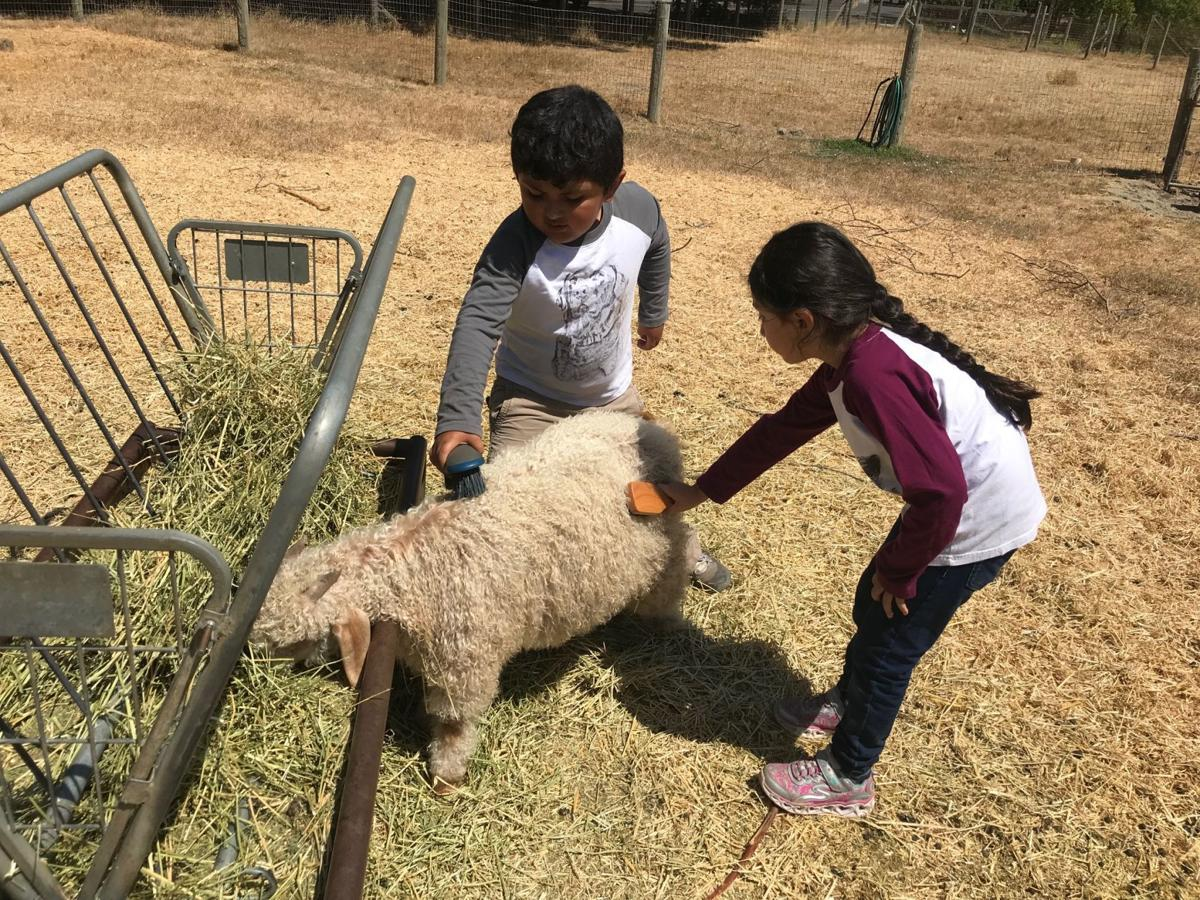 Two Connolly Ranch campers brush an angora goat at the ranch.
