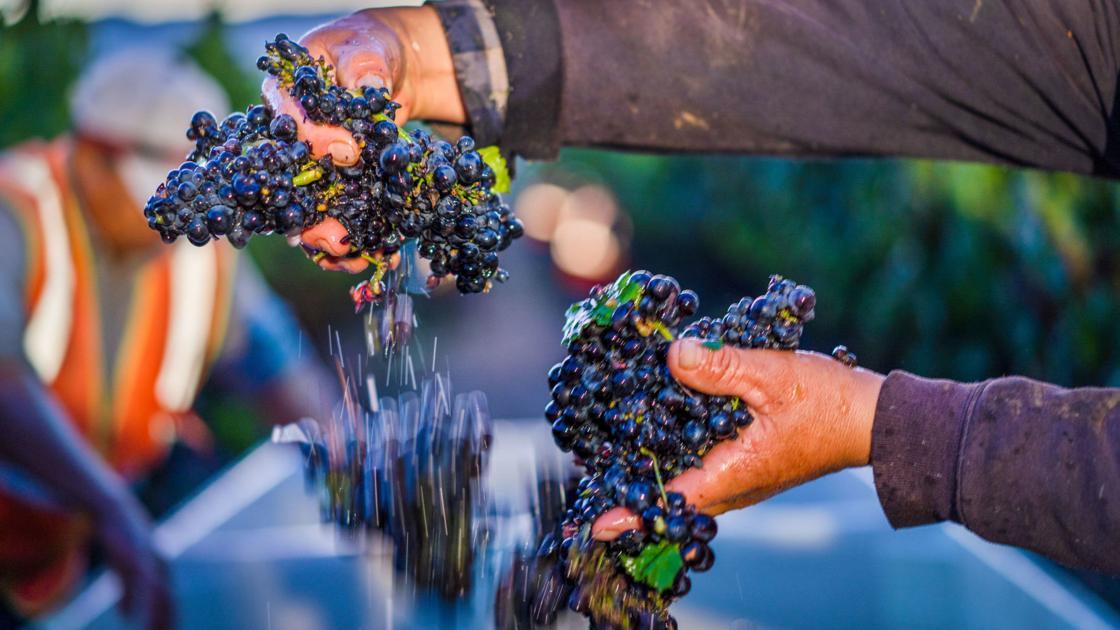 Gallo sues Napa's Amourvino Winery over breach of contract