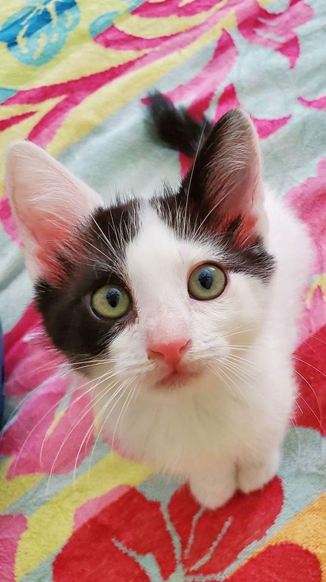 Adopt a Pet | Newton