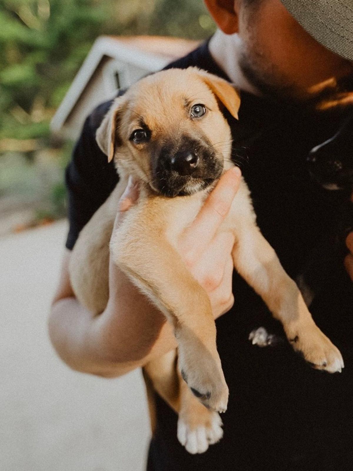 Adopt a Pet   Herschel