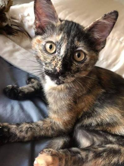Adopt a Pet | Vanya