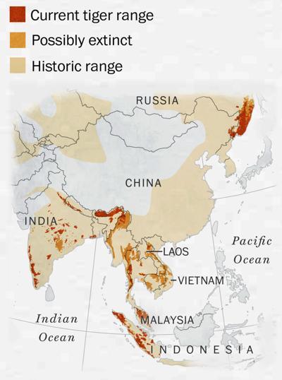 tiger-range-map-texture copy