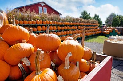 Step inside one of the country's biggest pumpkin farms