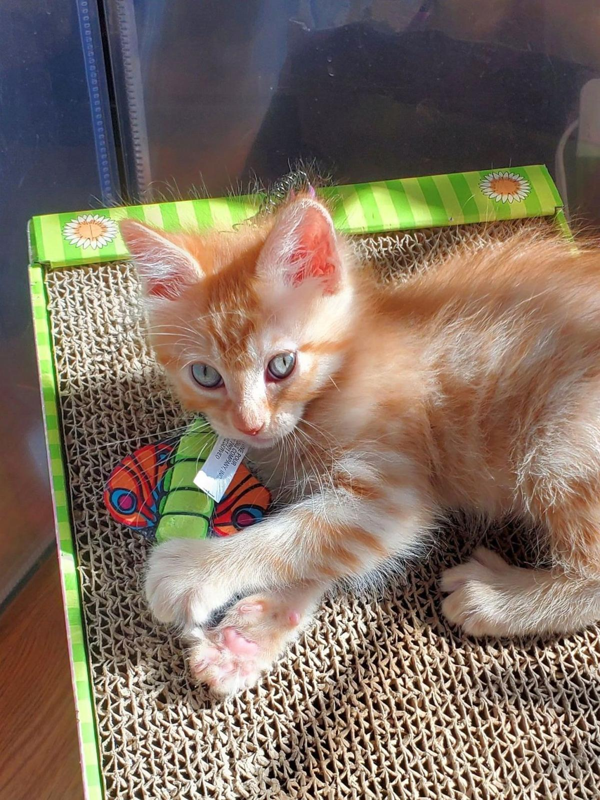 Adopt a Pet | Butterfinger