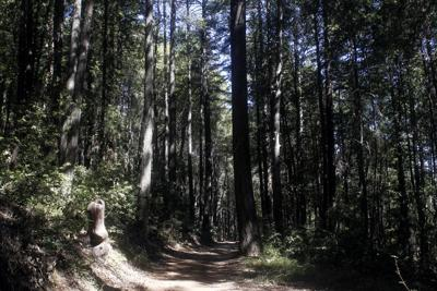 Pacific Union College forest