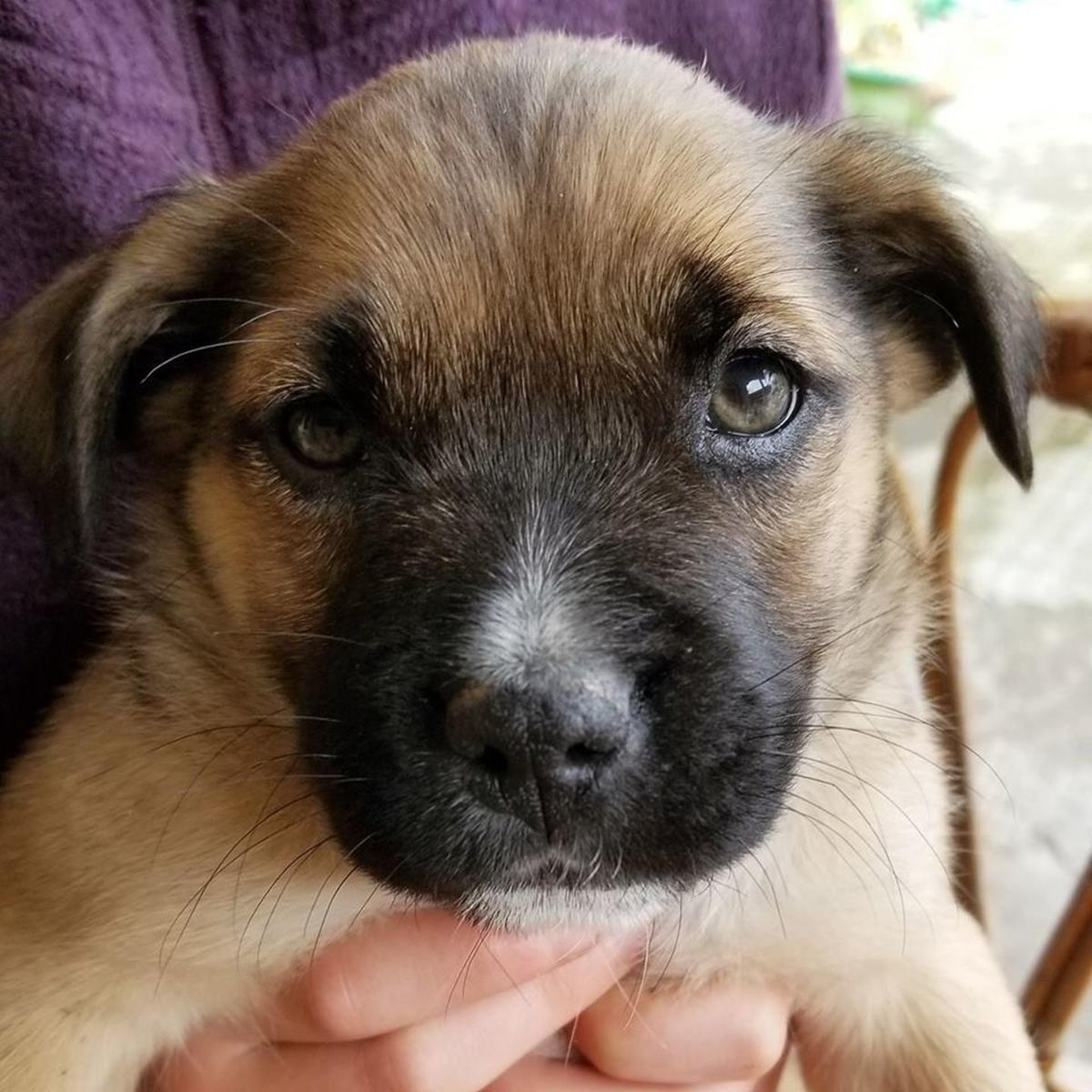 Adopt a Pet - Rufus