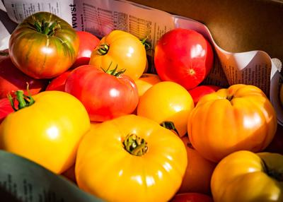 Forni Brown tomatoes