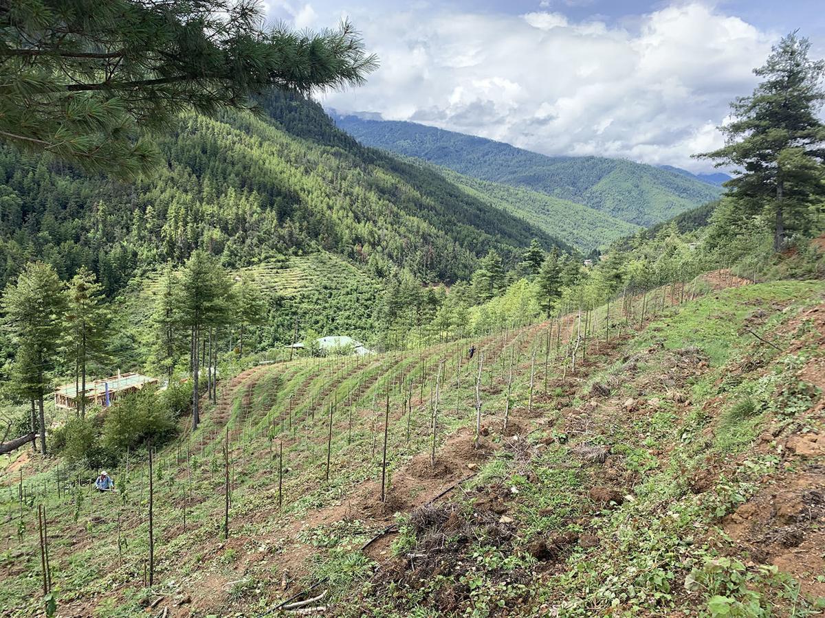WINE-BHUTAN