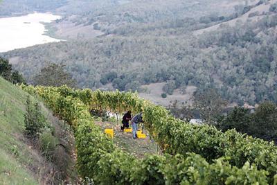 Gandona Winery