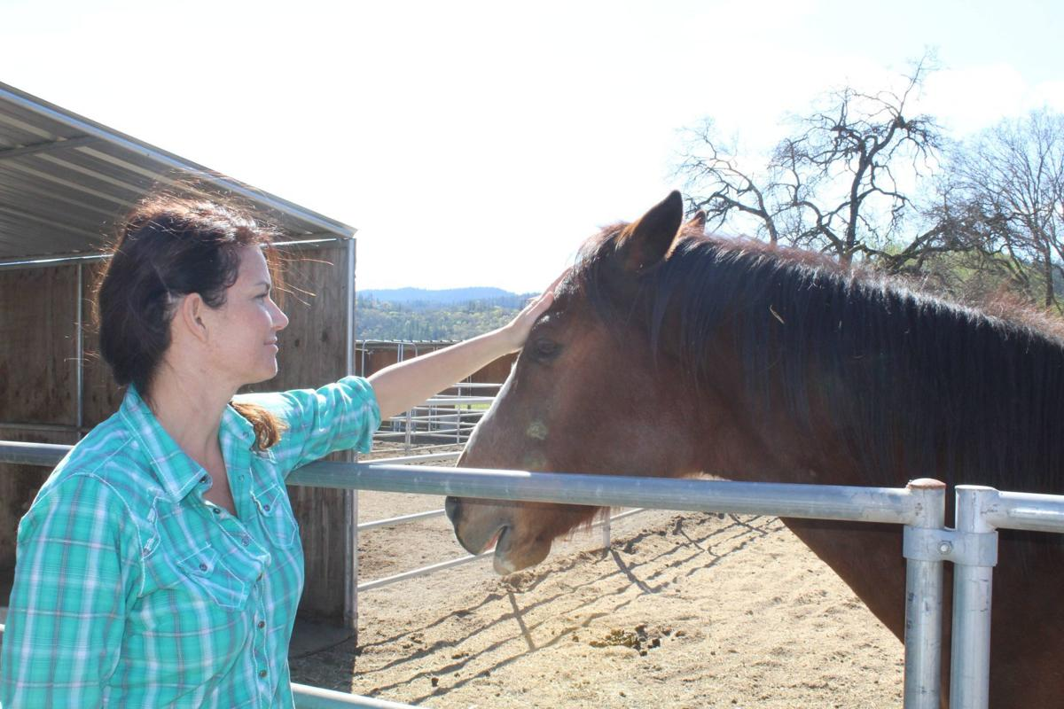 Sunrise Horse Rescue's dream of a permanent Napa Valley sanctuary gains momentum