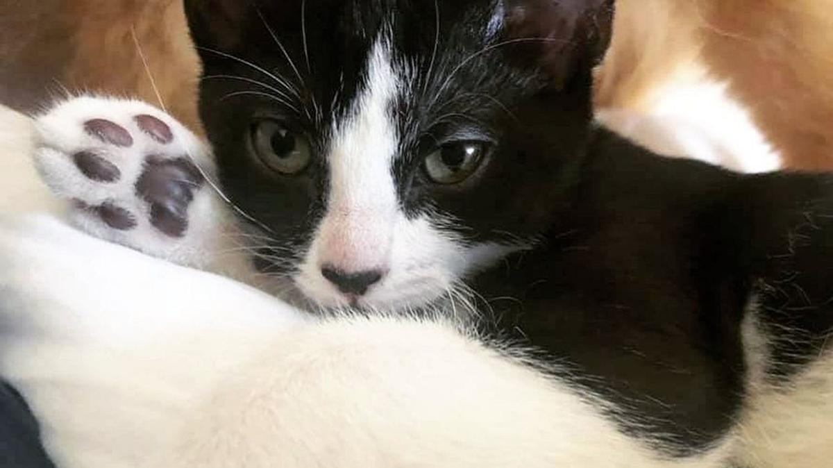 Adopt a Pet | Regina