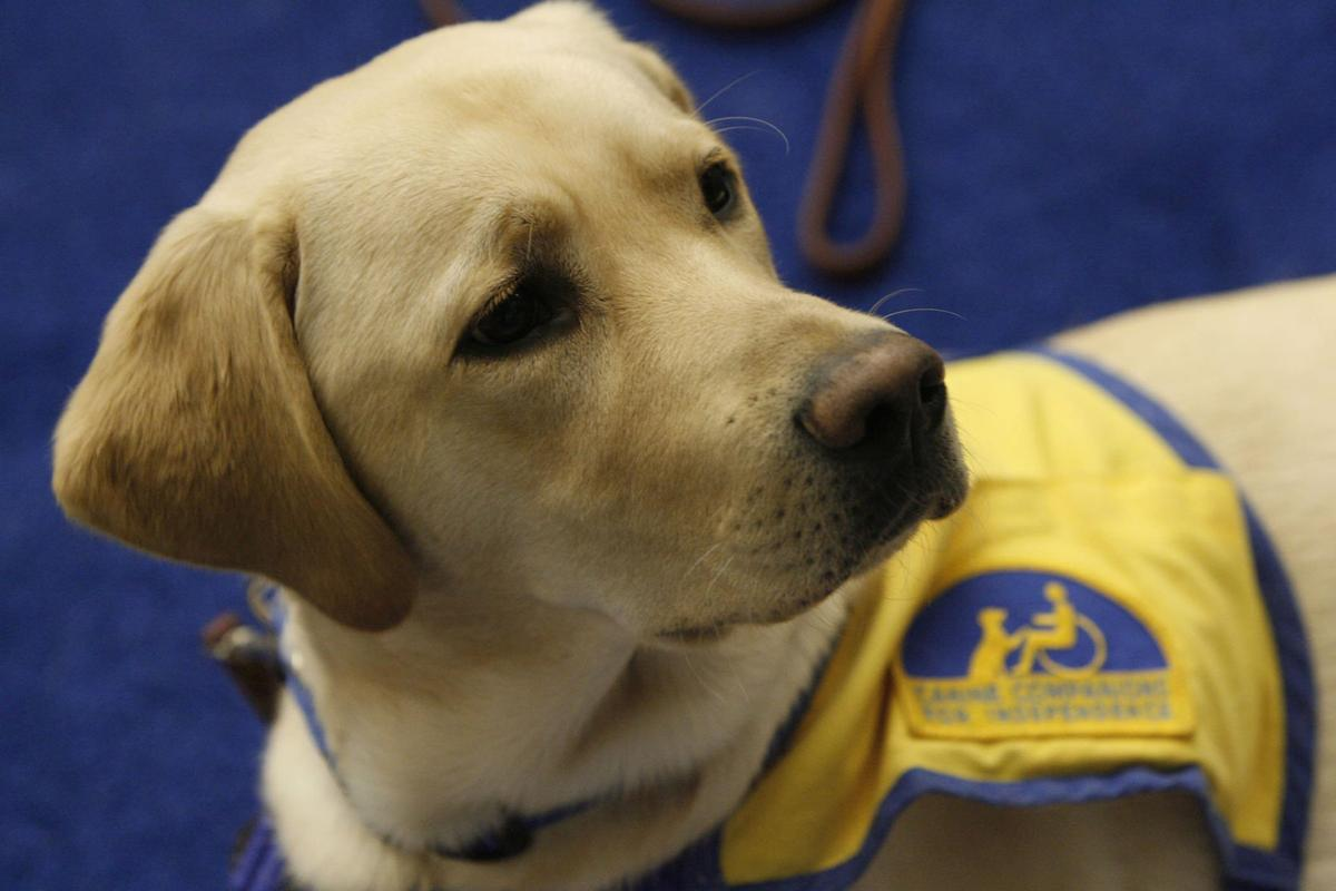 Airlines would no longer be required to consider emotional support animals as service animals under new rules proposed Wednesday by the U.S. Department of Transportation.
