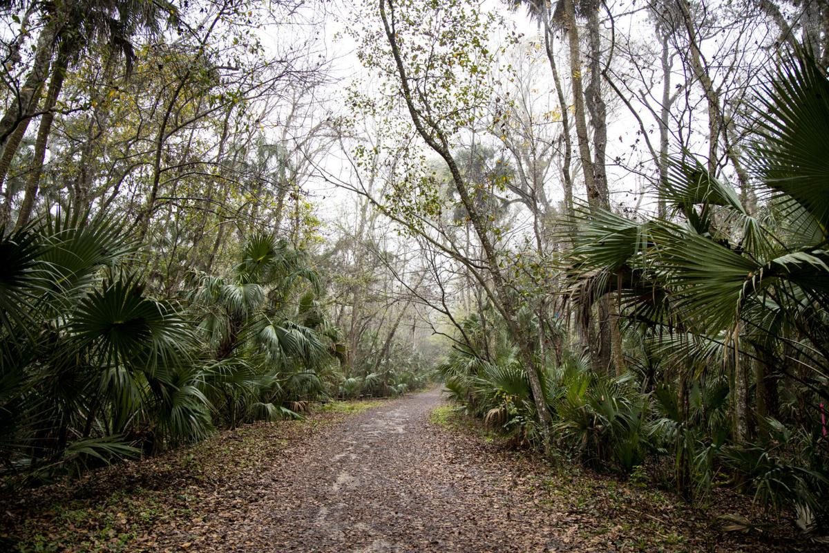 The 1,500- acre Spring Hammock Preserve in Seminole County contains the 2.2- mile Osprey Trail, seen on Wednesday, Feb. 10, 2021.