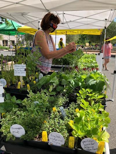 Rose_Loveall Morningsun Herbs